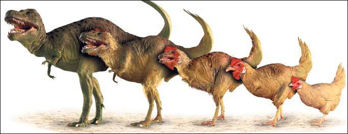 t-rex-chicken-devolution